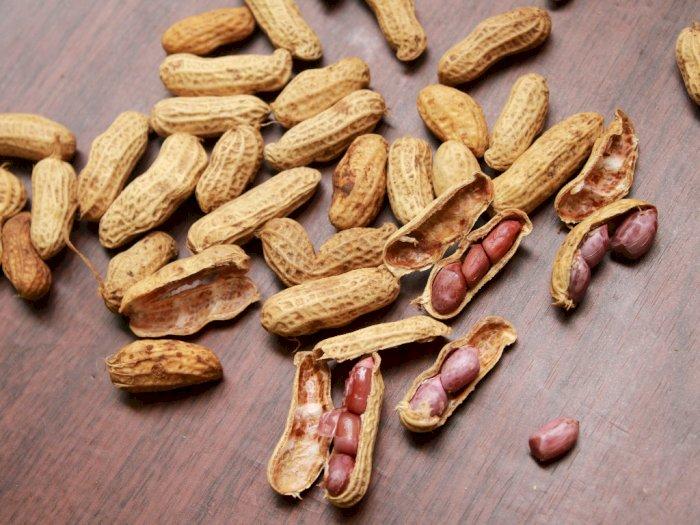 Ini Alasan Kenapa Kacang Rubah dan Kacang Tanah Camilan Penurun Berat Badan Terbaik