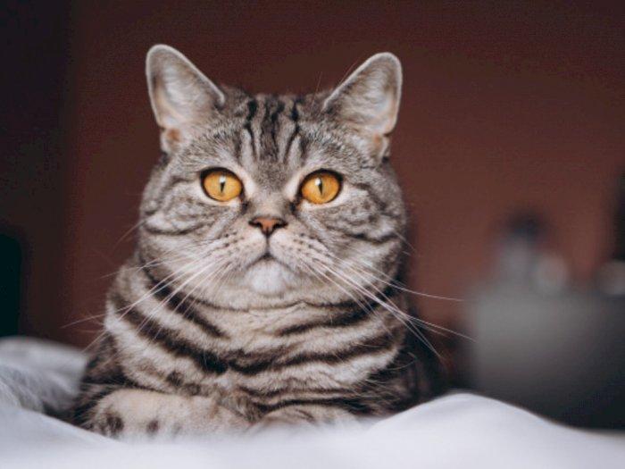 Benarkah Kucing Lebih Rentan Terpapar Virus Corona?