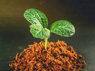 Fakta! Tumbuhan Dapat Merasakan Sakit dan Menangis