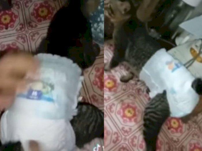 Viral Video Seekor Kucing Dipakaikan Popok oleh Majikan Karena Alami Diare