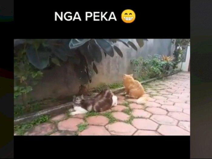 Viral Kucing Betina Minta Kawin, Pasangannya Ngga Peka, Tingkahnya Bikin Gemas