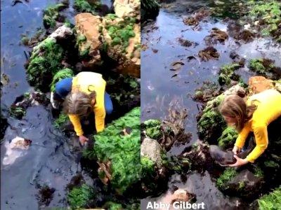 Salut! Gadis ini Selamatkan Hiu Kecil yang Tersangkut Batu Kembali Ke Air
