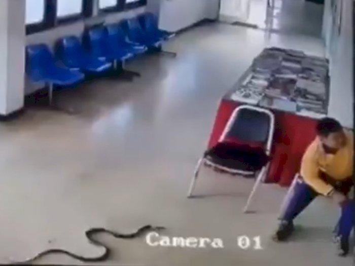 Viral, Video Ular Masuk ke Sebuah Kantor, Nyaris Menyerang Seorang Lelaki