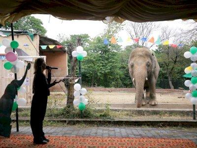 FOTO: Upacara Perpisahan Untuk Gajah Pakistan Bernama Kaavan