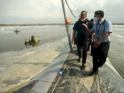 Menteri Edhy Prabowo Ditangkap KPK, Tata Kelola Ekspor Benih Lobster Minta Diperbaiki