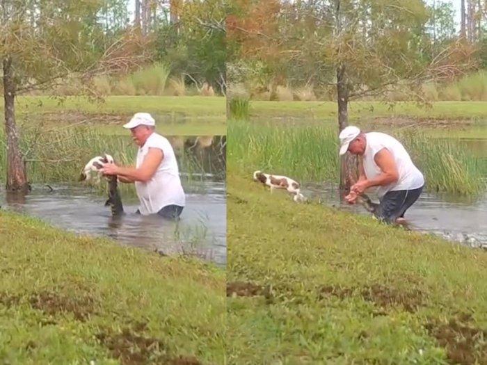 Greget! Kakek Ini Gelut Lawan Buaya yang Terkam Anjingnya Sambil Santai Merokok