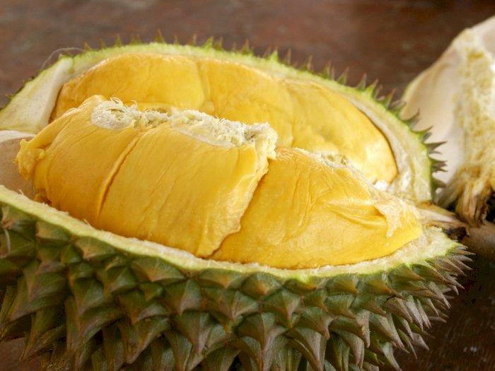 Mengapa Buah Durian Memiliki Aroma yang Sangat Menyengat?