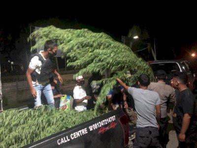 Ladang Ganja Ditemukan di Papua, Pemiliknya WN Papua Nugini Diburu Polisi