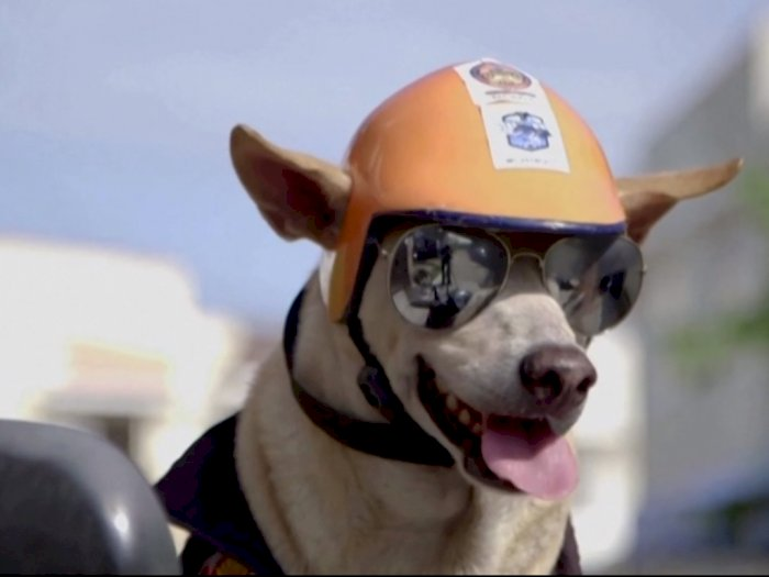 Eksis Abis, Anjing di Filipina Ini Jalan-Jalan Naik Motor Lengkap dengan Helm dan Kacamata