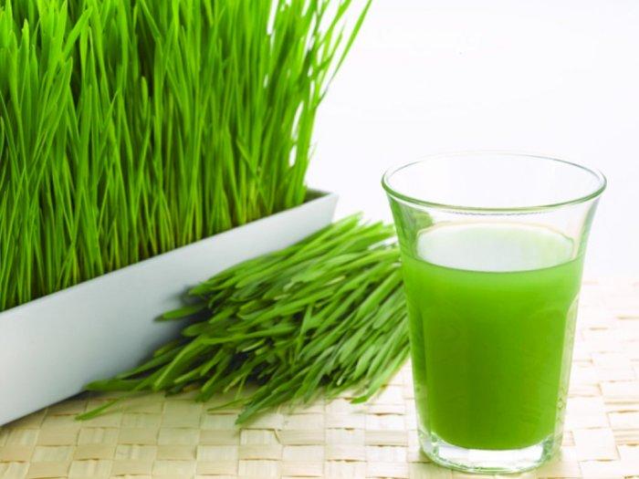 Mengenal Wheatgrass, Rumput Gandum yang Sering Dibuat Jus dan Smoothie