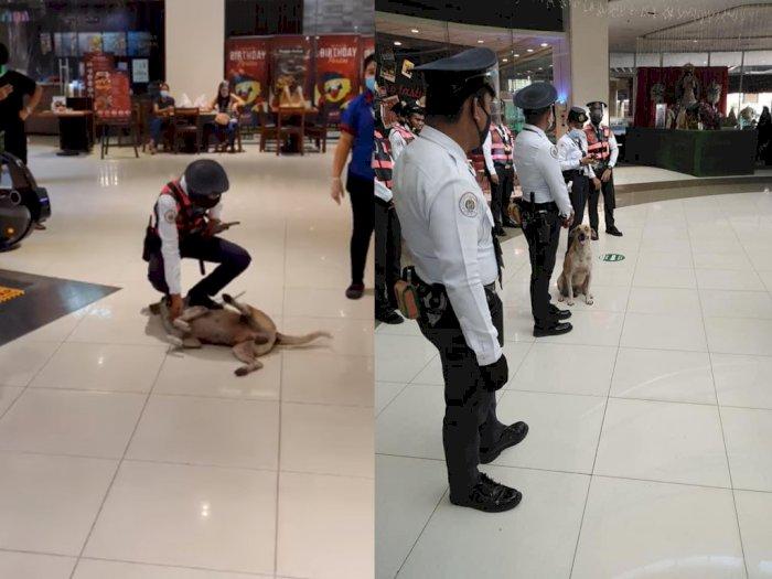 Anjing Liar Ini 'Ditahan' karena Masuk Mall, Kini Justru Diangkat Jadi 'Satpam'