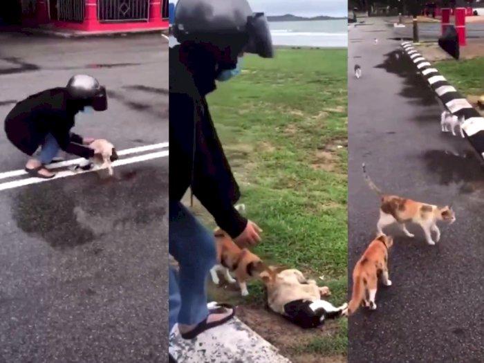 Kucing Ini Ditabrak Motor Hingga Tewas, Beberapa Kucing Lain Datang Seolah Melayat