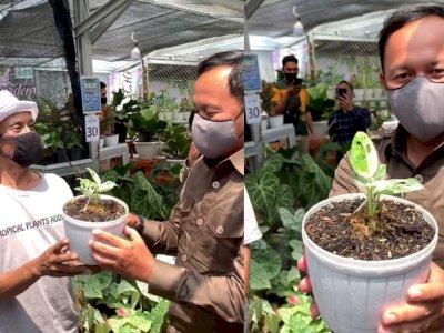 Wali Kota Bogor Kaget Dengar Harga Tanaman Janda Bolong, 'Segini 80 Juta? Saya Beli 10'