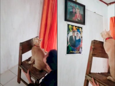 Video Kucing Oren yang Bantu Majikannya Tangkap Tokek, Bikin Netizen Gemas