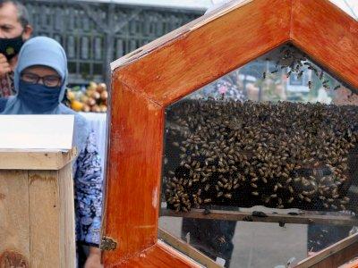 FOTO: Pameran Bogor Berkebun
