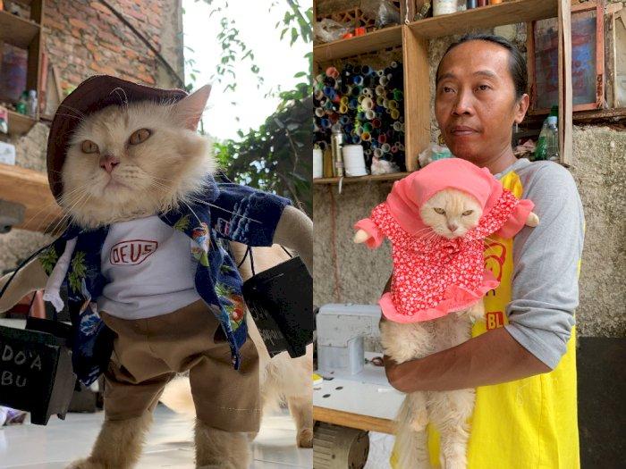 Bikin Gemas! Pria ini Bikin Fashion Untuk Kucing, Ada Kostum Super Hero