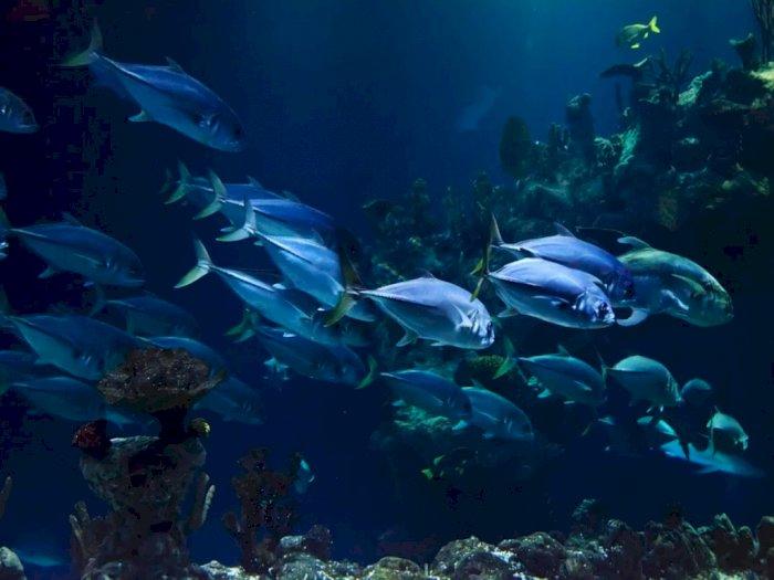 Dapatkah Ikan Air Asin Hidup di Air Tawar atau Sebaliknya?