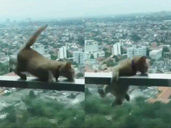 "Video Kucing Nyaris Jatuh dari Pagar Balkon Apartemen Bikin Netizen ""Jantungan"""