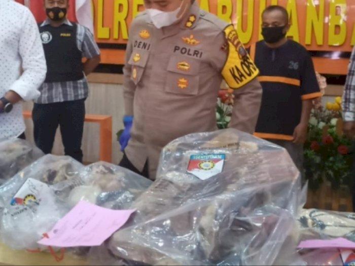 Terungkap Aksi Perdagangan Ilegal Organ Harimau Sumatra di Labuhanbatu, 2 Pelaku Diamankan