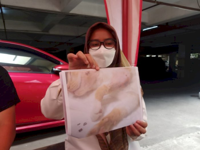 Tembak Kucing dengan Senapan Angin, Warga di Jakarta Timur Dipolisikan Pecinta Hewan