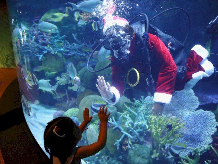 FOTO: Aksi Sinterklas Berenang di Akuarium Thailand Hibur Pengunjung
