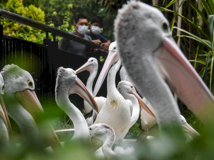 FOTO: Libur Panjang di Kebun Binatang Ragunan