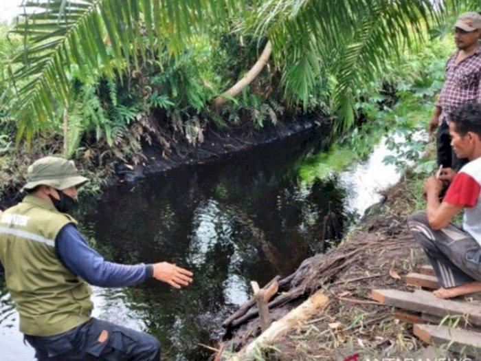 Usai BAB di Pinggir Sungai, Nenek di Sampit Kehilangan Tangan Kiri karena Serangan Buaya