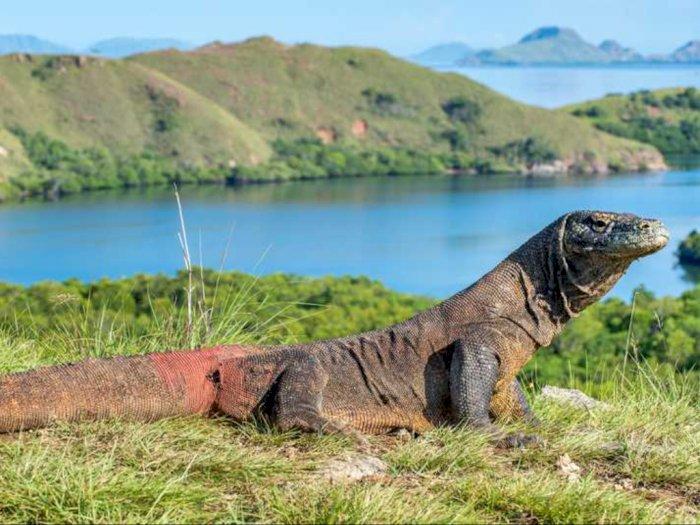 Laporan Progres Penataan Wisata Alam Lembah Loh Buaya Pulau Rinca Labuan Bajo