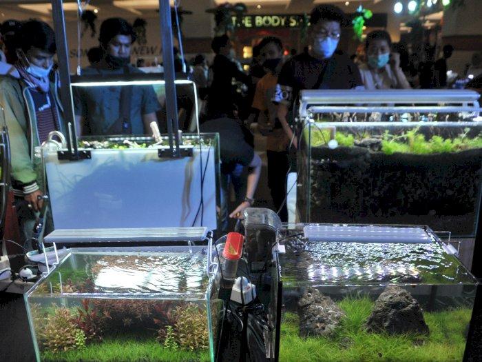 FOTO: Festival Aquascape dan Ikan Hias di Palembang