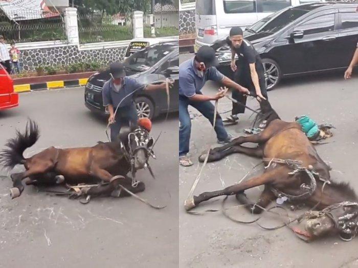 Viral Kuda Ambruk di Tengah Jalan yang Diduga Akibat Kelelahan, Ini Tanggapan Dishub