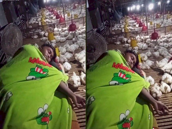 Viral Cowok yang Tidur di Kandang Jaga  Ayam, Netizen Ramai-ramai Beri Semangat