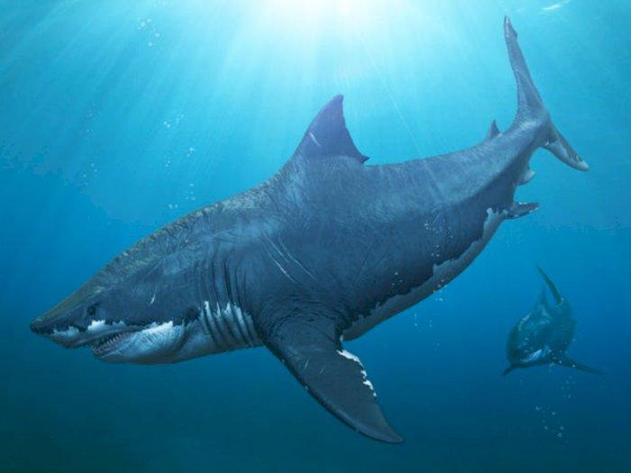 Berikut Fakta Megalodon yang #KAMUHARUSTAU