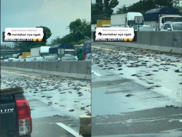Ketawain Ratusan Lele Menggelepar di Tengah Jalan, Kreator Tiktok Ini Tuai Kritik Netizen