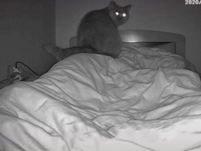 Kesulitan Bernapas saat Tidur Malam, Ternyata Ada Kucing Duduk di Dada Wanita Ini