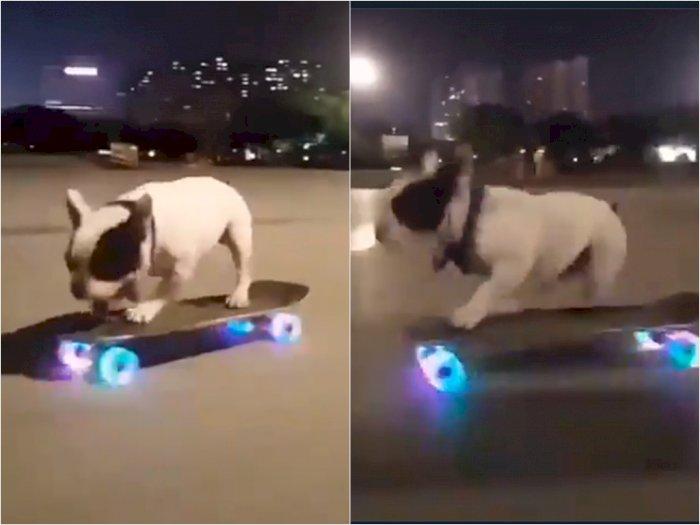 Video Saat Anjing yang Jago Main Skateboard, Bikin Netizen Takjub
