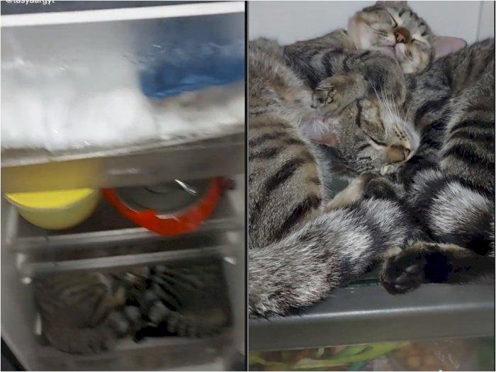 Cewek ini Punya Kucing yang Suka Tidur di Dalam Kulkas, Bikin Netizen Heran