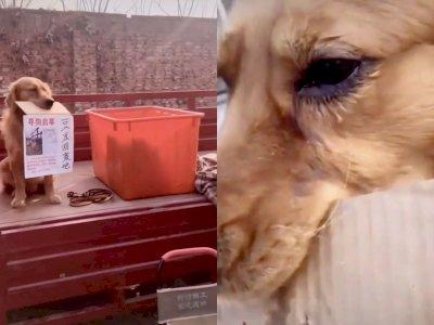 Anjing Ini 'Menangis' Sambil Pegang Catatan yang Minta Pencuri Agar Mengembalikan Temannya