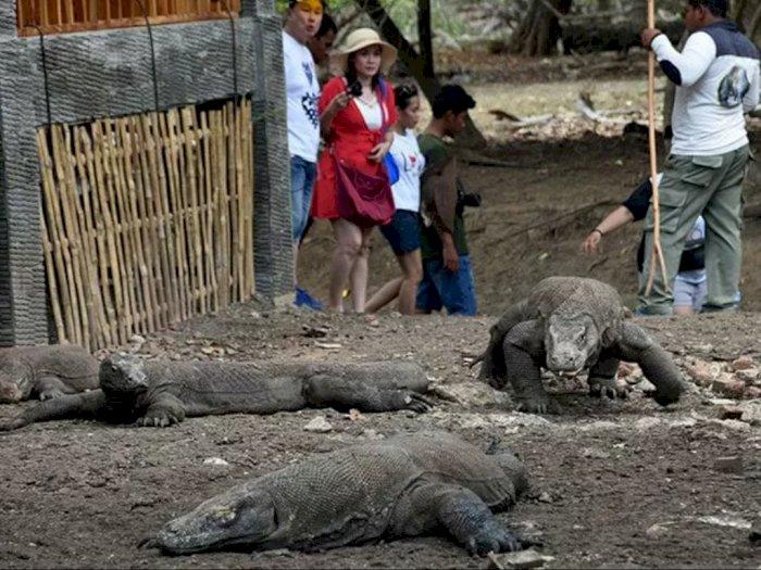 Fakta Balita Tangannya Putus Digigit Komodo di Pulau Komodo, Bukan yang Pertama