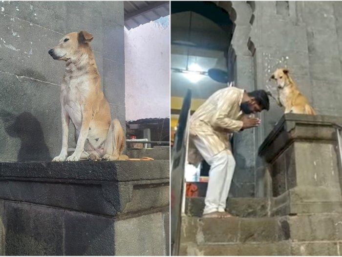Viral Tingkah Anjing Liar 'Memberkati' Para Peziarah Kuil di India
