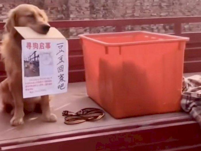 Aksi Anjing Ini Saat Pegang Tulisan Agar Temannya Dikembalikan Bikin Terharu
