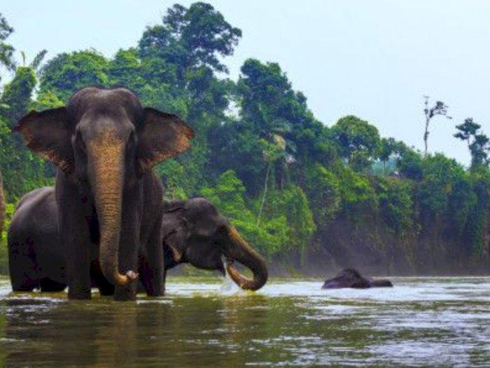 Sekda Pemprov Sumut Bilang Tangkahan dan Bukit Lawang akan Jadi Destinasi Wisata Dunia