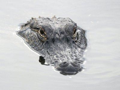 Fakta atau Mitos: Air Mata Hewan Tak Begitu Beda dengan Manusia?