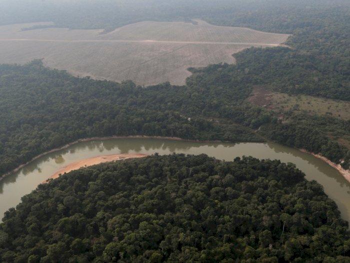 Perubahan Iklim Mungkinkan Buat Hutan Hujan Amazon Jadi Sabana Kering