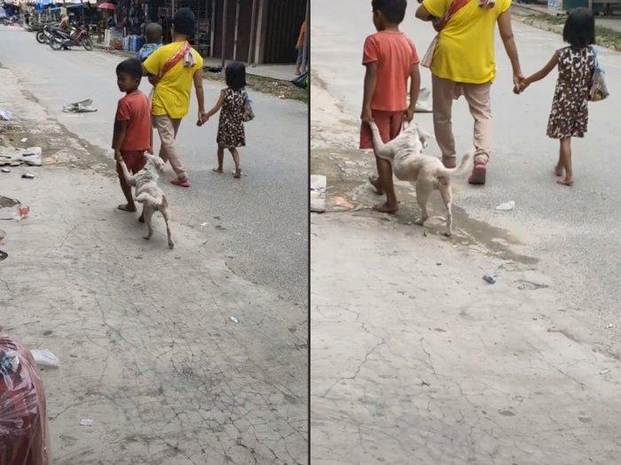 Video Bocah Bawa Anjingnya Jalan-jalan, Bikin Netizen Gemas Sekaligus Heran