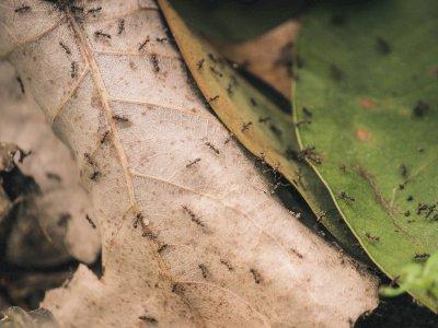 Berbagai Mitos Yang Kabarnya Bisa Membunuh Semut Padahal Tidak