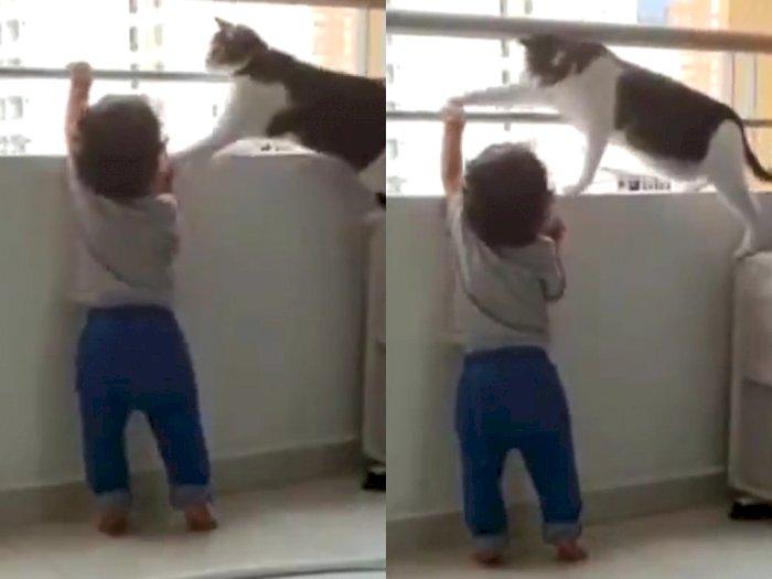 Viral Video Kucing Coba Melindungi Anak saat Bermain di Balkon, Aksinya Disebut 'Malaikat'