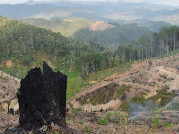 Anggota DPR Soroti Adanya Aktivitas Eksplorasi Hutan yang Berlebihan