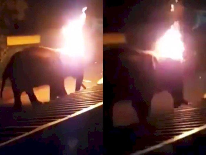 Seekor Gajah di India Tega Dibakar Hidup-hidup hingga Tewas, Bukti Kekejaman Manusia