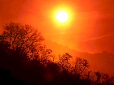 Gelombang Panas di Australia Dianggap Bisa Timbulkan Bahaya Kebakaran Hutan