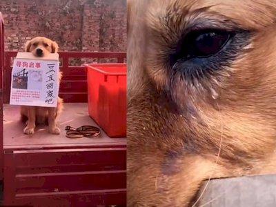 Anjing Ini Menangis Mencari Sahabatnya yang Dicuri oleh Orang Tak Dikenal